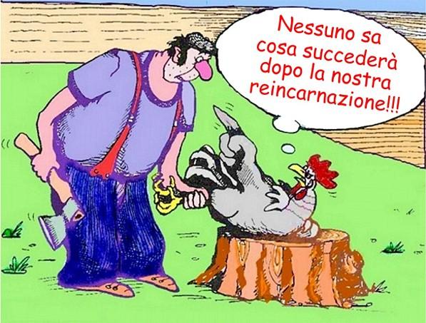 gessnergallus coquinarius - in cucina con zio conrad - Come Cucinare Il Gallo