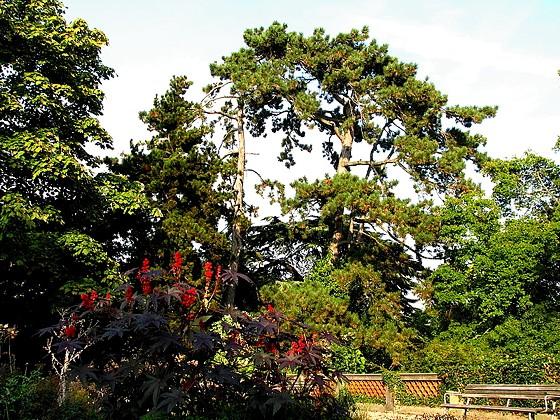 giardino botanico zurigo gessner garten z rich. Black Bedroom Furniture Sets. Home Design Ideas