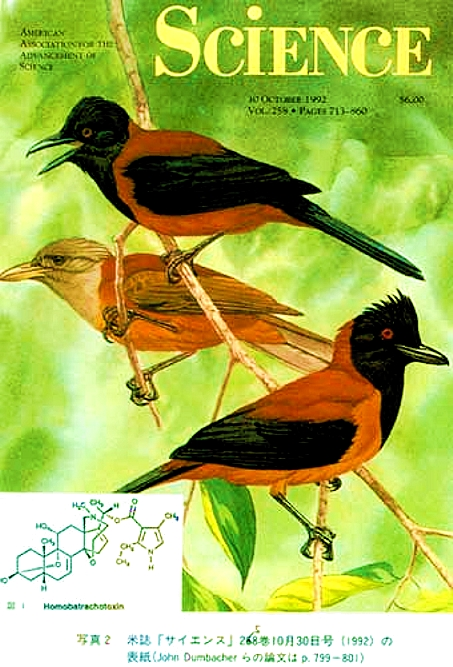 http://www.summagallicana.it/Volume3/010fig005%20Pitohui%20kirhocephalus%20Science%201992.jpg