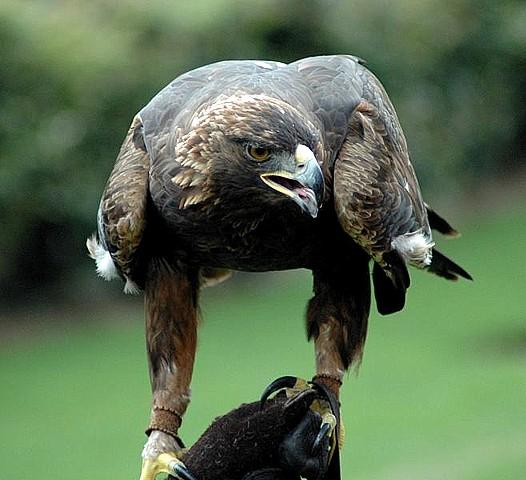 Fotos de rapaces y grandes aves - Fotografía digital y